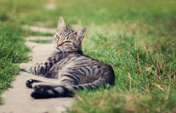Cat lying in the grass. A cat resting in the grass Royalty Free Stock Image