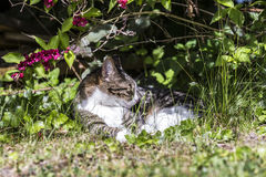 Cat lying on the grass Royalty Free Stock Image