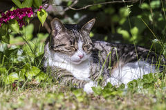 Cat lying on the grass Royalty Free Stock Photography