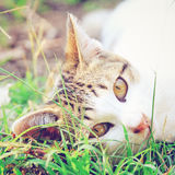 A cat lying on green grass with retro effect Royalty Free Stock Photo