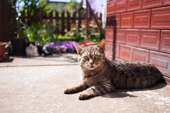 Cat lying on ground Stock Photography