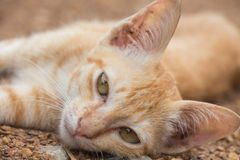 Cat lying on the ground Royalty Free Stock Photography