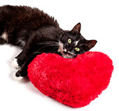 Cat lying on the heart-formed pillow Royalty Free Stock Image