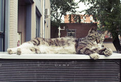 The cat lying on high Stock Photo