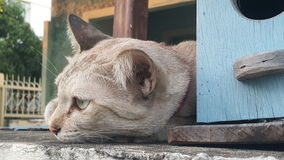 Cat lying on house fence top. Brown cat lying on house fence top Royalty Free Stock Photos