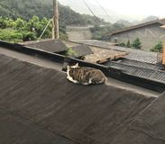 A cat lying on the house rooftop. The cat forgets about the world while lying on the rooftop. The photo was taken in Jiufen, Taipei Royalty Free Stock Image