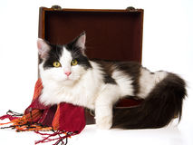 Cat lying inside brown suitcase on white Stock Photos