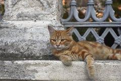 Cat Lying jaune sur un mur en pierre images stock