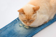 Cat lying on jeans Stock Photos