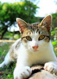 A cat lying on log wood Stock Photography