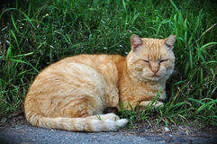 Cat lying in the long green grass Royalty Free Stock Photos