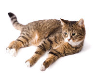 Cat lying and looking Stock Photos