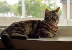 Cat lying and looking someone on window. At home royalty free stock photos