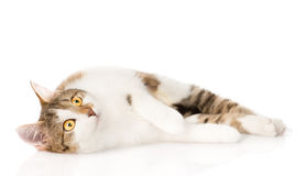 Cat lying and looking up.  on white background Royalty Free Stock Photo