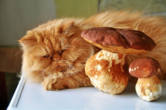 Cat lying near mushrooms Royalty Free Stock Image