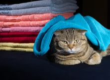 Cat lying near a stack of various colors towels on a dark background. Selective focus stock photos