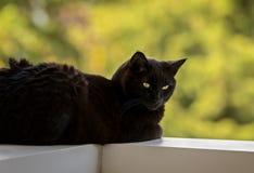 Cat Lying nera maschio su un'inferriata del balcone Fotografia Stock Libera da Diritti
