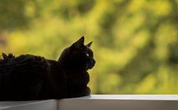 Cat Lying nera maschio su un'inferriata del balcone, guardante alla destra Fotografie Stock