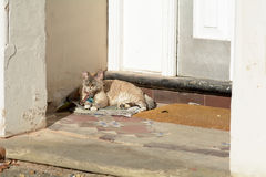 Cat lying on newspaper in the sunshine in porch. To house Stock Photography