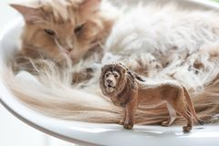 Cat and Plastic Toy Lion Stock Photo