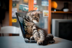 Cat lying on the notebook Stock Image