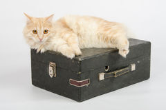 The cat is lying on an old suitcase with a gramophone on a white background Royalty Free Stock Images