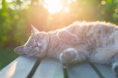 Free Cat Lying On Bench In Backlight At Sunset Royalty Free Stock Photo - 54898605