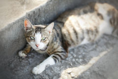Free Cat Lying On The Street Stock Photography - 30194072