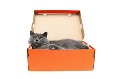 Cat lying in an open box on a white background. Stock Photography
