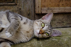 Cat lying outside Stock Image