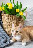 Cat Lying på Gray Plaid Indoor, Cosiness royaltyfria foton