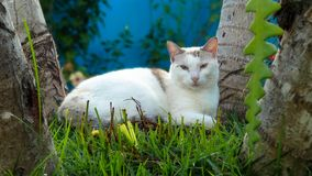 Cat lying in the garden. stock photos