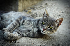 Cat lying. On the pavement Royalty Free Stock Photo