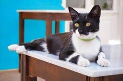 Cat Lying pigra su una Tabella nelle isole greche Fotografia Stock Libera da Diritti