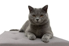 Cat lying on a pillow on white background Stock Photos