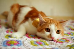 Cat lying on a plaid Royalty Free Stock Photography
