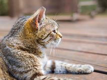 Cat lying profile brigh colours. Cat lying profile on a wood bright colours Stock Photo