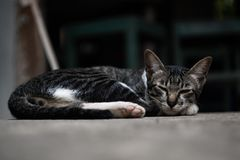 Cat lying and Relax very comfortably. stock photo