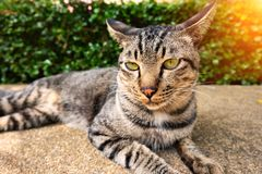 The cat is lying on the road. royalty free stock photography