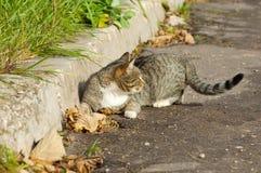 Cat lying Stock Photography