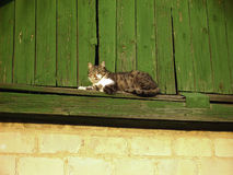 Cat lying on the roof Royalty Free Stock Image