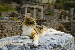 The cat is lying on the ruins royalty free stock photo