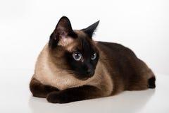 Cat Lying siamesa en el escritorio blanco Fondo blanco Mirada abajo Fotografía de archivo