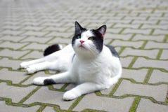 Cat lying on the sidewalk Royalty Free Stock Photo
