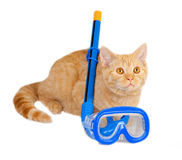 Cat lying with snorkel Royalty Free Stock Image