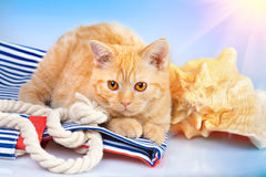 Cat lying with snorkel and big shell Stock Photos