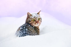 Cat lying in snow Royalty Free Stock Photos