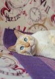 Cat lying on the sofa Royalty Free Stock Photos