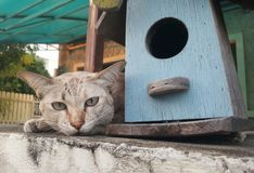 Cat lying and staring. Brown cat lying on house fence, staring Stock Images