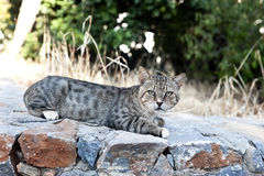 Cat lying on stone fence Royalty Free Stock Photos